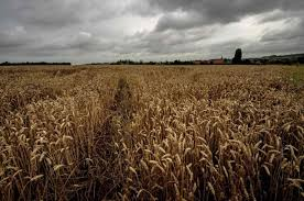 Crops focused agriculture policy